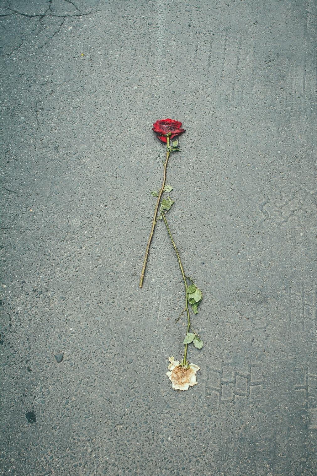 Rosen überfahren